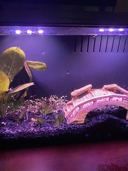 Fish Tank 3 gallons for Sale in Tracy,  CA