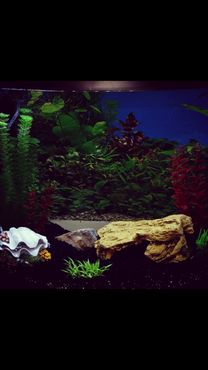 Fish tank and equipment for Sale in Atlanta, GA