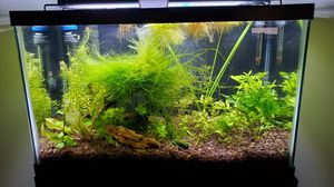 10 Gallon Aquarium for Sale in Seattle, WA