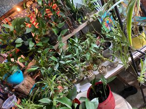 House plants for Sale in Finleyville, PA