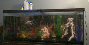 75 gal fish tank for Sale in Fresno, CA