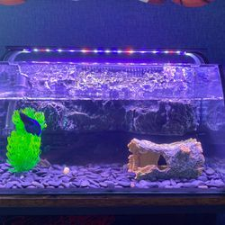 Hagger Fish Tank With Accessories (Decorations, Water Heater, Filter, and Lights) 8 Gallon for Sale in Bristol,  CT