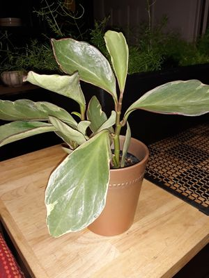 House Plant for Sale in Ceres, CA