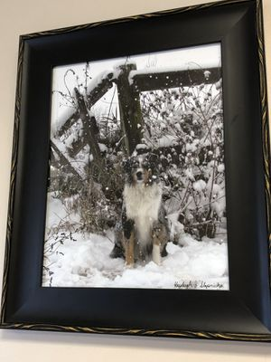 Professional dog picture for Sale in East Moline, IL