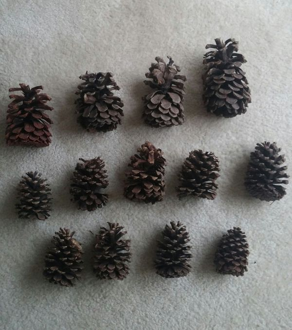 Natural Rustic Pine Cones/Lot Of 35/Assorted Sizes