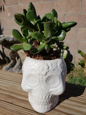 Halloween succulent home/office decor for Sale in Lancaster, CA