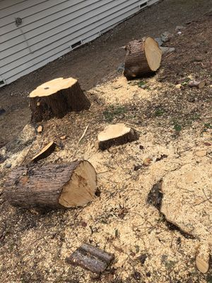 Free Cedar Firewood rounds. for Sale in Federal Way, WA
