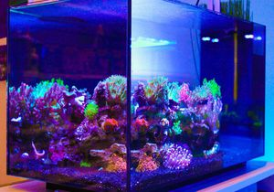 Fluval evo 13.5 tank only for Sale in MARTINS ADD, MD