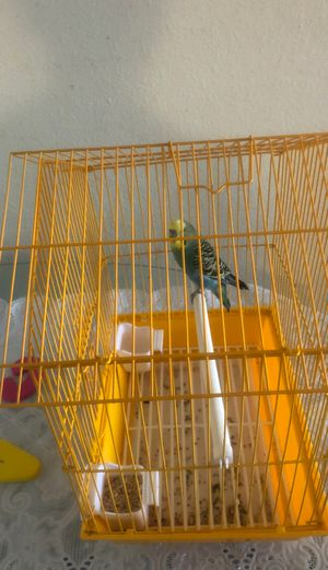 1 parakeet and 2 cages for Sale in Tracy, CA