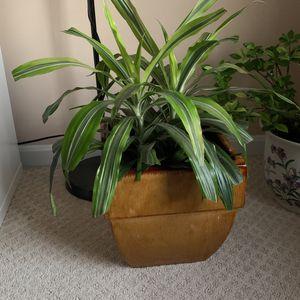 Pot&Plant for Sale in Woodbridge, VA