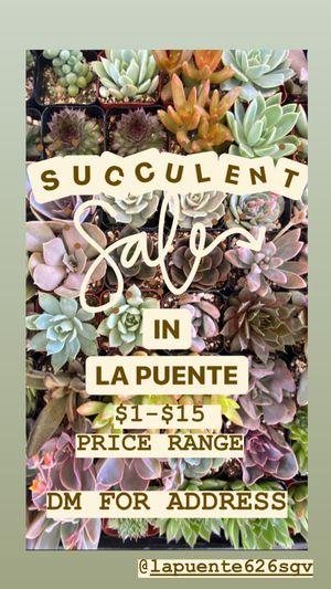 Succulent Sale! 07/03 for Sale in Hacienda Heights, CA