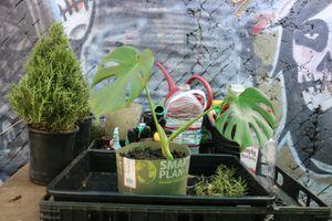 Monstera for Sale in Garden Grove, CA