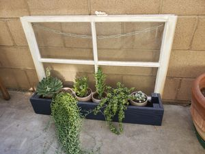 Suculants vintage window planter for Sale in Riverside, CA