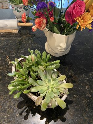 Succulents for Sale in Arlington, VA