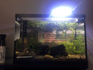 20 Gallon fish tank for Sale in Reedley, CA