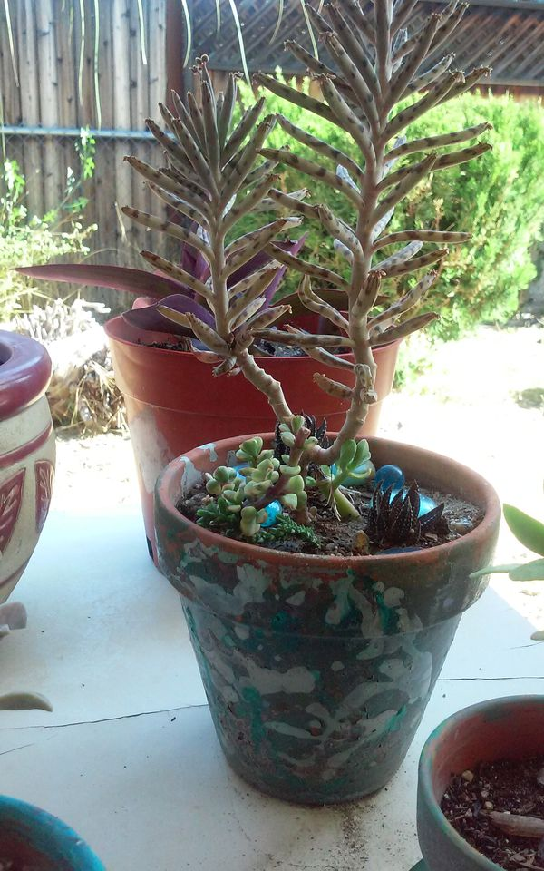 Unique succulent plants easy to grow tiger stripped pattern and leopard dot pattern