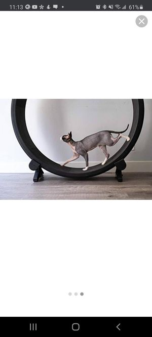 One fast cat exercise wheel for Sale in San Diego, CA