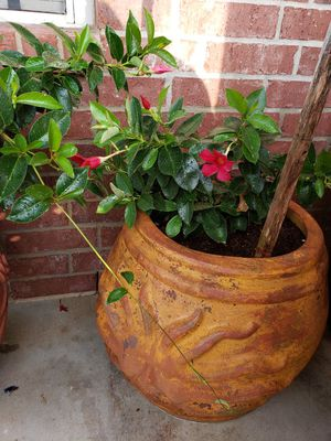 Plant for Sale in Buda, TX