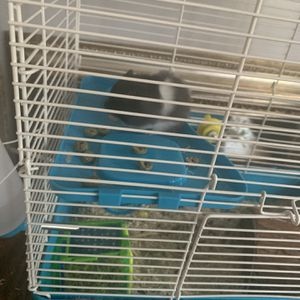 Hamster Cage Comes With Everything for Sale in Los Alamitos, CA