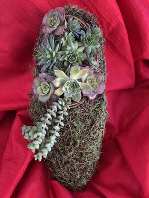 Succulent plants in green moss shoe for Sale in Fresno, CA
