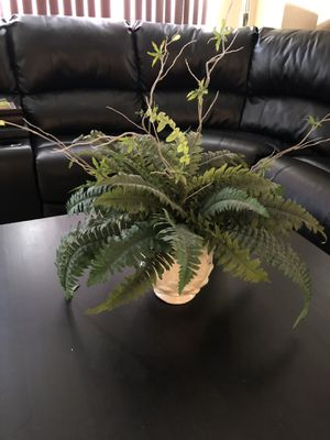 Pot plant for Sale in Corona, CA