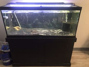 75 gallon fish tank and stand for Sale in Auburn, WA
