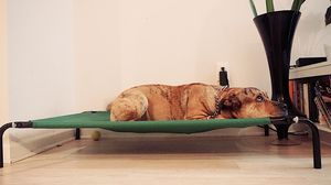 Elevated Dog Bed for Sale in Washington, DC