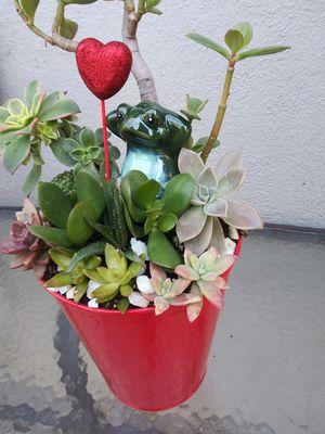 Succulents en cubeta rroja de ❤ corazones for Sale in South Gate, CA