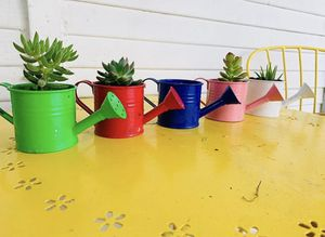 1 Succulent in mini water pail for Sale in Paramount, CA