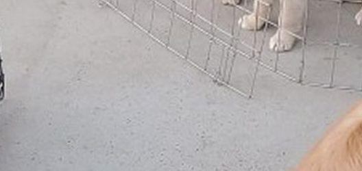 Gold en Dog Crate for Sale in Lake Elsinore,  CA