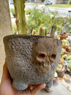 Raw tri skull planter for Sale in San Bernardino, CA