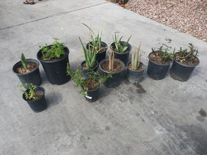 Plantas for Sale in North Las Vegas, NV