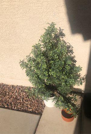 Ikea arbusto for Sale in Phoenix, AZ