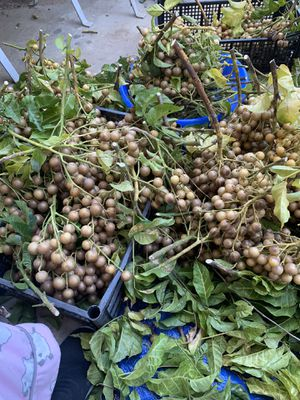 Organic Clausena Wampee Plant (We don't use any sort of harsh chemicals on out tree, it's very healthy ) for Sale in Monterey Park, CA