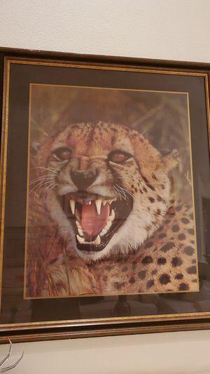 Real Photograph Cheetah for Sale in Phoenix, AZ