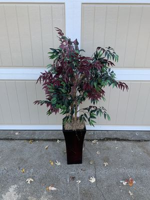 House plant for Sale in Roswell, GA