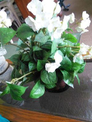 Flower for Sale in Avon Park, FL