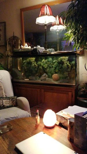 65 gallon Salt Water Aquarium for Sale in Arroyo Grande, CA