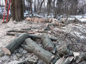 Free firewood fresh cut for Sale in Brentwood, PA