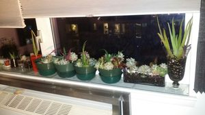 Small to large drought tolerant succulents for Sale in New York, NY