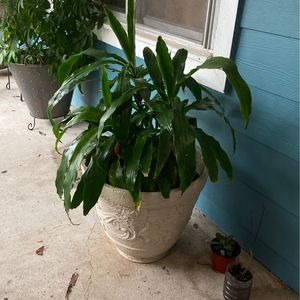 House Plant With Handmade Pot for Sale in Houston, TX