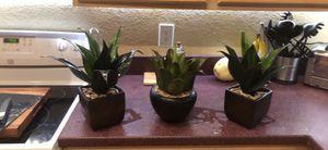 pier1 phony succulents for Sale in Las Vegas, NV