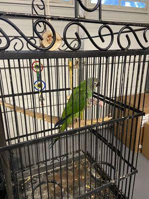 Pretty bird cage for Sale in Rialto, CA