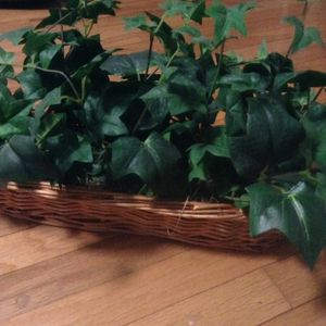 Fake plant for sale must pick up in kennesaw for Sale in Kennesaw, GA