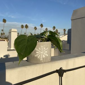 Great Holiday Gift - Brand New Planter + Plant for Sale in Santa Monica, CA
