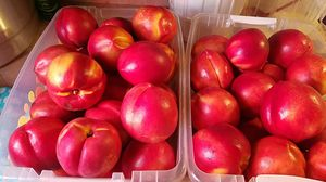 Nectarines for Sale in Fresno, CA