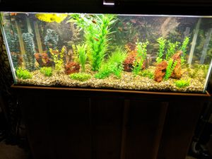 75 gallon glass tank for Sale in Mill Creek, WA