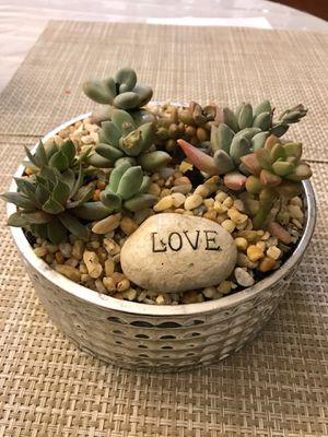 Decorative succulent for Sale in Plano, TX