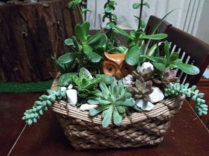 Succulents en canasta chica for Sale in South Gate, CA