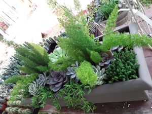 """24"""" pot with succulent plants for Sale in Whittier, CA"""